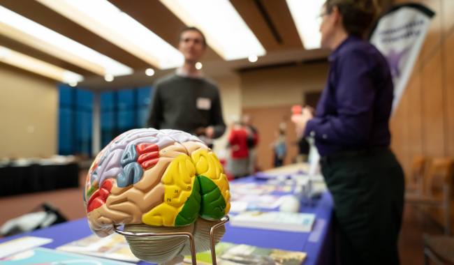 colorful model of a brain sitting on a table
